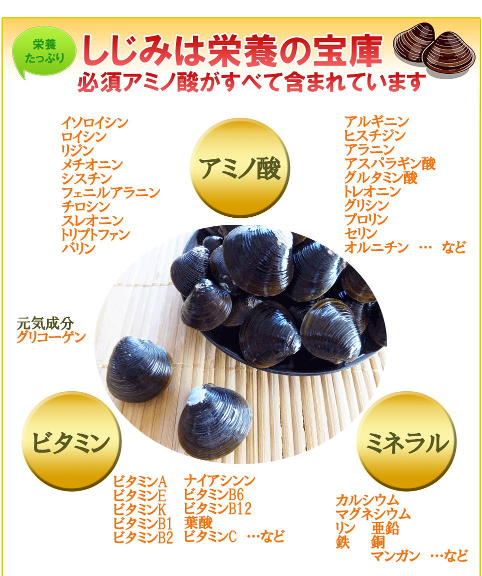 しじみの栄養 アミノ酸(必須アミノ酸)、ミネラル、ビタミン